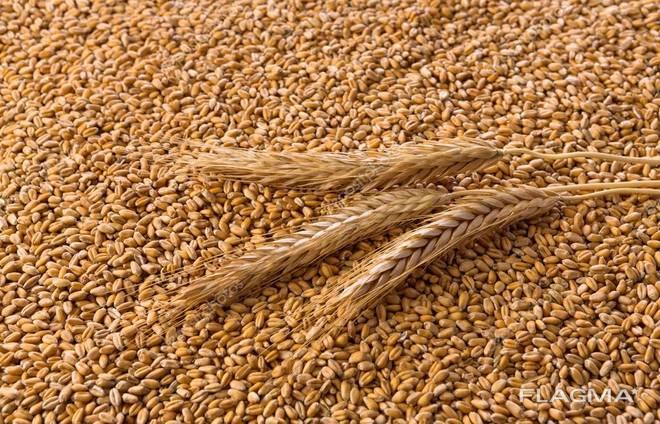 Экспорт Пшеница ( 2.3.4.5. класс ) FOB Одесса