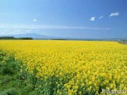 Продам рапс соя ячмень пшеница