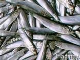 Продам рыбу и морепродукты Азовского моря