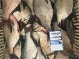Продам рыбу свежую, свежемороженую карп - фото 1
