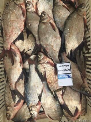 Продам рыбу свежую, свежемороженую карп