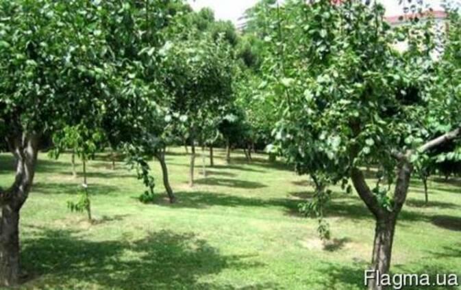 Продам сад в Днепропетровской обл. 100 га