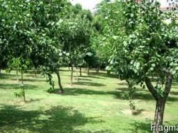 Продам сад в Днепропетровской обл. 100 га - фото 1