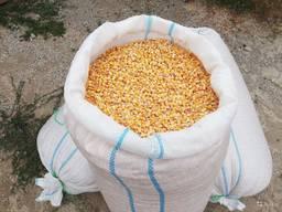 Продам сахарную кукурузу, Одесская обл, Измаил.