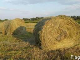Продаем сено полевое и луговое . с доставкой. и выгрузской.