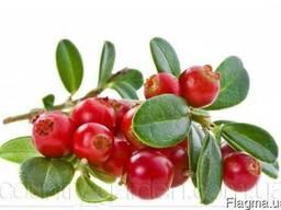 Продам саженцы Клюквы - Вашингтон и много других растений