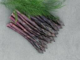 Продам саженцы спаржи фиолетовой, саженцы аспарагуса