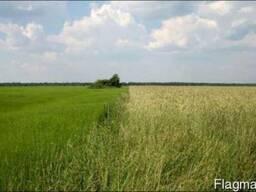 Продам сельхозпредприятие, агропредприятие, субаренда - 450