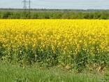 Продам сельхозпредприятие в Николаевской области 2788га - фото 1