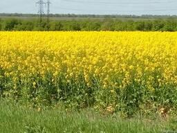Продам сельхозпредприятие в Николаевской области 2788га
