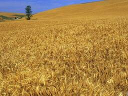 Продам сельхозпредприятие в Ровенской области - 1500 га.