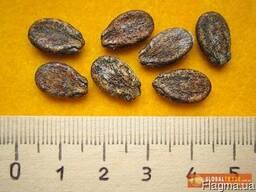 Продам семена арбузов в ассортименте, опт и розница