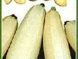 Продам семена кобачков Грибовский, Асперант, Чаклун, Золотинка