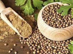 Продам семена Кориандр Нектар, Оксанит, Янтарь
