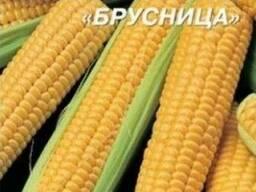 Продам семена кукурузы сахарной оптом и в розницу