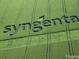 Продам семена кукурузы Сингента (Syngenta) СИ Топмэн.