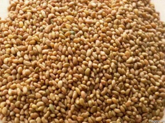Продам семена люцерны в большим и малом оптом