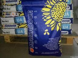 Продам семена Маисадур (подсолнух)