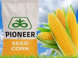 Продам семена подсолнечника и кукурузы Лимагрейн, Пионер.