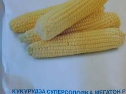 Продам семена сахарной кукурузы Мегатон F1 SN2 -4000шт