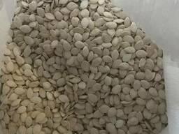 Продам семена тыквы , сорт Серо Волжская калибр 12