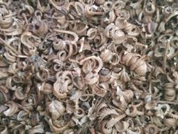 Продам семена календулы