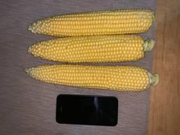 Продам Сладкую Кукурузу ГСС 3071