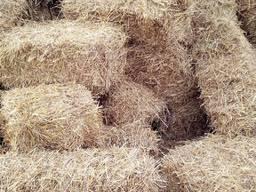 Продам солому в тюках (ячневая пшеничная)