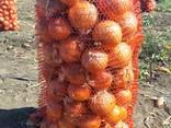 Продам сто тонн лука Репчатого, фото реальные. - фото 1