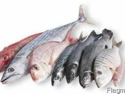 Продам свежемороженую рыбу оптом и в розницу.