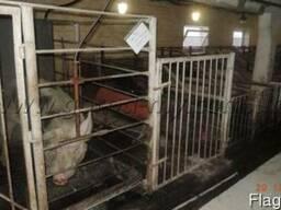 Продам свиноферму 5000 кв.м. в Днепропетровской обл.