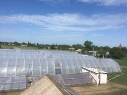 Продам тепличное хозяйство с фермой 600м2