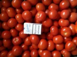 Продам томат на переработку
