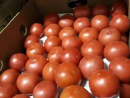 Продам томат в ассортименте оптом