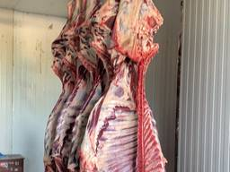 Продам мясо телятина говядина свинина