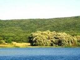 Продам великолепный участок возле леса в с. Гончарное