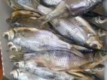Продам вяленую рыбу - фото 1
