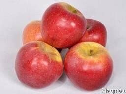 Продам яблоки 1,2 сорта