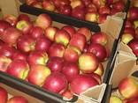 Продам яблоки из Польши - фото 2