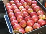 Продам яблоки из Польши - фото 4