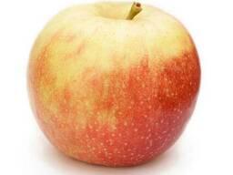 Продам яблоки сорт Аскольда
