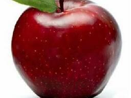 Продам яблоки сорта Черный Принц