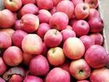 Продам яблука зимових сортів - фото 2