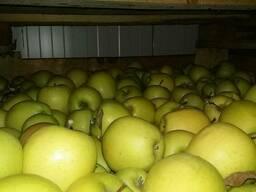 Продам яблуко 1 та 2 сортів