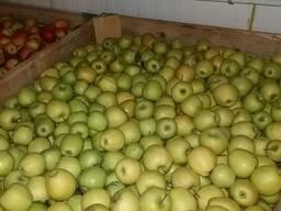 Продам яблуко Голден
