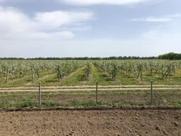 Продам яблочный сад 370 га Продам яблуневий сад 370 га