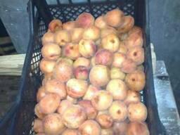 Продам замороженный абрикос. Мелкий\крупный ОПТ