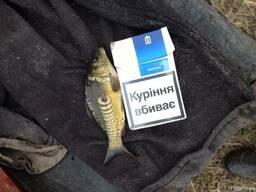 39ea0cb58e4a84 Зарибок коропа ціна, де купити в Україні