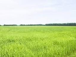 Продам земельный участок 12 сот в Авангарда / ул. Сельская