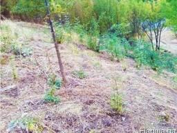 Продам земельный участок 8 сот Лазурное Алушта Крым